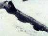 Атомная подводная лодка (Проект 645ЖМТ) Кит - фото взято с электронной энциклопедии Военная Россия